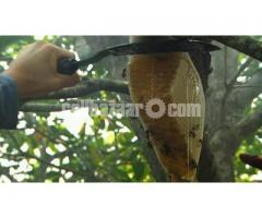 সুন্দরবনের খাঁটি মধু - Honey
