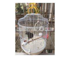 China Round Iron Bird cage Portable