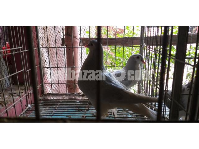 Big size Lahore silver siraji baby pair sale - 2/3