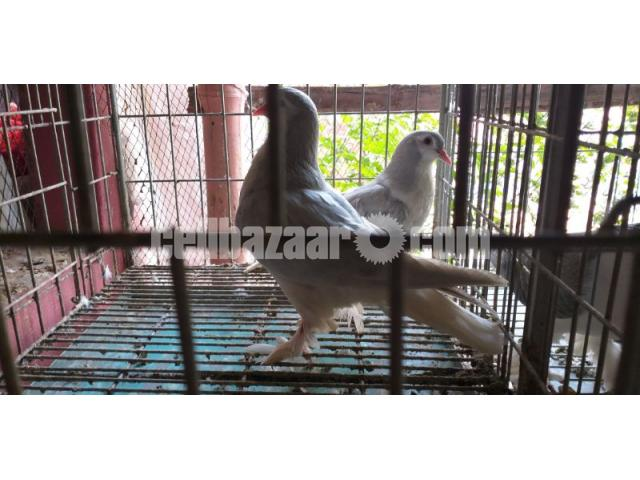 Big size Lahore silver siraji baby pair sale - 3/3