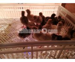 Turkey 0size baby urgent sale
