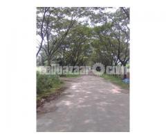 5 Katha with Boundary, L-Block near 300ft road- Bashundhara