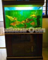 Aquarium with big colourful fishes