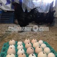 kadanat murgi egg