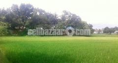 15 Bigha Industrial land for sale at Narsingdi , Shibpur