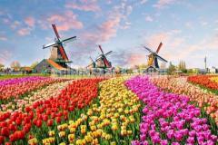 visa process Netherlands