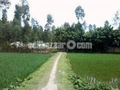 LAND SALE IN ULIPUR- উলিপুর পৌরসভায় জমি বিক্রি