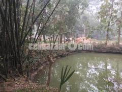 50 bigha land for sale at gazipur - Image 3/4