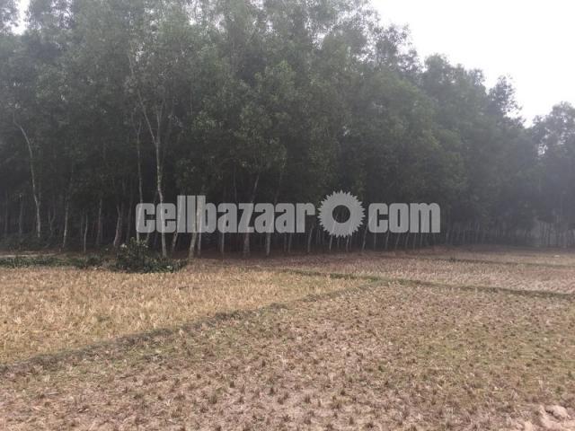 50 bigha land for sale at gazipur - 4/4
