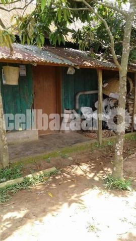54 Bigah  land for sale at Dhamsouir - 1/5