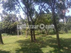 54 Bigah  land for sale at Dhamsouir - Image 2/5