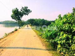 54 Bigah  land for sale at Dhamsouir - Image 4/5