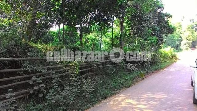 80 bigha land for sale at sreepur gazipur - 2/4