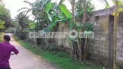 80 bigha land for sale at sreepur gazipur - Image 4/4