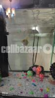 Aquarium - Image 3/5