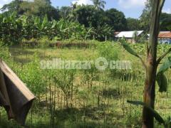 House Land for sell with natural environment
